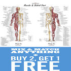 A2 A3 A4 Internal Human Anatomy Muscular Skeletal Student Posters Print Chart