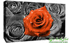 Floral Orange Rose on Bed of Roses Abstract CANVAS WALL ART Picture Print