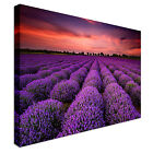 Lavendar Field At Sunset Canvas wall Art prints high quality great value