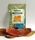 High Quality Premium Grade A Catappa Leaves, Indian Almond Leaf, Ketapang Leaf