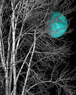Black White Teal Moon Tree Bedroom Home Decor Wall Art Matted Picture