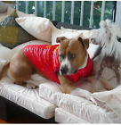 BIG DOG COAT LARGE DOG WARM WINTER RED JACKET LINED WINDPROOF up to 98cm chest
