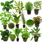 Live Tropical Aquarium Fish Tank Aquatic Plants For Sale - Freshwater Plants