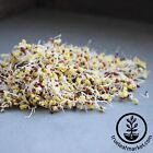 CERTIFIED ORGANIC BROCCOLI SPROUTING SEEDS - GROW SPROUTS BROCCOLI AT HOME