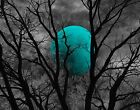 Black White Turquoise Moon Tree Modern Home Decor Wall Art Matted Picture