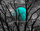 Art - Black White Turquoise Moon Tree Modern Home Decor Wall Art Matted Picture
