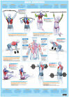 Body+Building+Back+Muscles+Poster+Weight+Training+Exercise+Chart+++