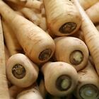HOLLOW CROWN PARSNIP GARDEN SEEDS - NON-GMO, HEIRLOOM, VEGETABLE