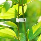 10/50/100x Plant Support Durable Clips Garden Vegetables For Types Plant Hanging
