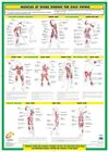 Golf Swing Training Muscle Anatomy Chart Golf Instruction Laminated Poster