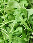 Roquette Arugula Seeds, Rocket, Colewort, NON-GMO, Variety Sizes, FREE SHIPPING