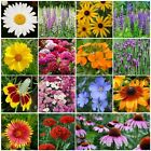 Kyпить All Perennial Wildflower Mix, 15 Species Flowers, Variety Sizes, Easy Grow на еВаy.соm
