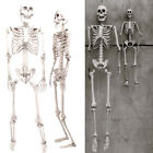 "35""/67"" Scary Skull Bone Party Human Skeleton Halloween Prop Decoration Poseable"