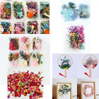 1 Box Mixed Dried Flowers for Photo Frame Candle Epoxy Filling Art Crafts Random