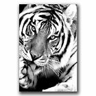 ' Bengal Tiger in Black and White  ' Modern Abstract Animal Wall Art Deco Canvas