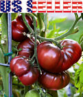30+ ORGANICALLY GROWN Black Krim Tomato Seeds Sweet Heirloom NON GMO Low Acid US