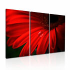 FLOWER Daisy 6 Canvas 3A Framed Printed Wall Art ~ 3 Panels