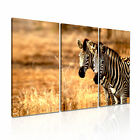 ANIMAL Zebra 15 Canvas 3A Framed Printed Wall Size ~ 3 Panels