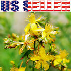 1000+ ORGANICALLY GROWN St. John's Wort Seed NON-GMO Antidepressant Mood Booster