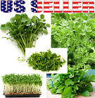 300+ ORGANICALLY GROWN Cress Salad Blend Seeds Mix 5 Varieties Heirloom NON-GMO