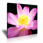 FLOWER Lotus Canvas Framed Printed Wall Art 8 ~ More Size