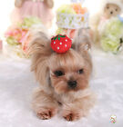 Pet Dog Hair Bows Tie Clips Bees Sun Grooming Accessories Boutique Hair Pin