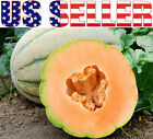 30+ ORGANICALLY GROWN Tuscany Cantaloupe Muskmelon Seeds Heirloom NON-GMO