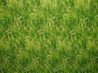 Green Grass Cotton Fabric - Curtain Blinds Craft Quilting Patchwork Upholstery