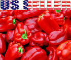 30+ ORGANICALLY GROWN GIANT Sweet Chinese Pepper Seeds Heirloom NON-GMO Huge Big