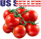 30+ ORGANICALLY GROWN Cherry Brandywine Tomato Seeds Heirloom NON GMO Indeterm