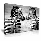 NEW ANIMAL Zebra 14 Canvas Framed Printed Wall Art ~ More Size