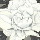 Kate Mawdsley PURE PEONY II giclee print VARIOUS SIZES new SEE OUR STORE