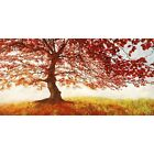 Quadro su Pannello in Legno MDF Jan Eelder Red Leaves