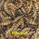 250 to 4,000  Live Superworms ALL SIZES Free Shipping!