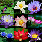 10Pcs Bonsai Lotus Water Lily Flower Bowl Pond Fresh Seeds Perfume Blue Lotus