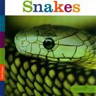 SNAKES - RIGGS  KATE - NEW HARDCOVER BOOK