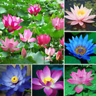 10Pcs Rare Lotus Water Lily Flower Bowl Pond Fresh Bonsai Seeds Ourdoor Indoor