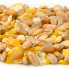MIXED CORN High Quality Animal Pet Feed For Hens, Birds, Ducks, Fish