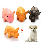 Cute Pig Grunting Squeak Latex Pet Chew Toys for Dog Squeaker Chew Training Pet