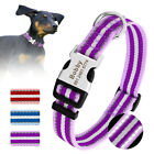 Personalized Reflective Small Large Dog Collars Nylon Collar Custome Name Plate