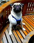 Mesh Dog/Puppy Anti-Pull Harness -Stops Pulling Instantly No choke Humane Design