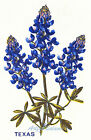 Ceramic Decals Texas Bluebonnet Blue Floral image