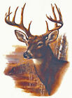 Ceramic Decals Buck Deer Profile Plain/Background Scene image