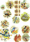 Ceramic Decals Birds Floral Scenes Duck Woodpecker Robin Mockingbird  Many More image