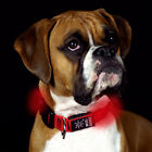 Nite Dawg LED Red Dog Collar in S,M,or L and matching LED Pet Leash