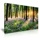 LANDSCAPE Forest Bluebell 17 Canvas Framed Printed Wall Art ~ More Size