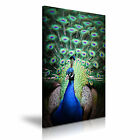 NEW ANIMAL Peacock 7 Canvas 1p Framed Printed Wall Art ~ More Size