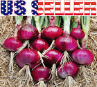 150+ ORGANICALLY GROWN Red Creole Onion Seeds Heirloom NON-GMO Spicy Delicious!