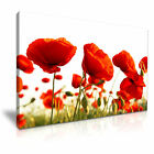 Poppy Flower Poppies Wall Art Canvas Print Home Office Deco 9 sizes from 12.99