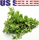 100+ ORGANICALLY GROWN Sweet Marjoram Seeds Heirloom NON-GMO Fragrant Flavorful